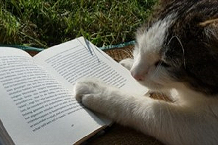 Make It Easy To Read - Cat watching owner read