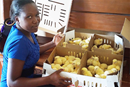 Tendai Musandaka, 20, holds a box of chicks that she and other women and girls will raise to generate income in Marange, Zimbabwe, which has been affected by drought. The farming program is led by The United Methodist Church's Ministry with Women, Youth and Children and funded by the UMCOR