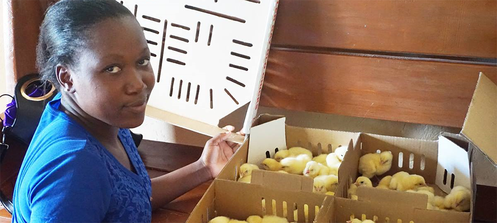 Tendai Musandaka, 20, holds a box of chicks that she and other women and girls will raise to generate income in Marange, Zimbabwe, which has been affected by drought. The farming program is led by The United Methodist Church's Ministry with Women, Youth and Children and funded by the UMCOR.