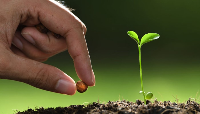 Hand planting a seed with seedling showing. Stock photo.