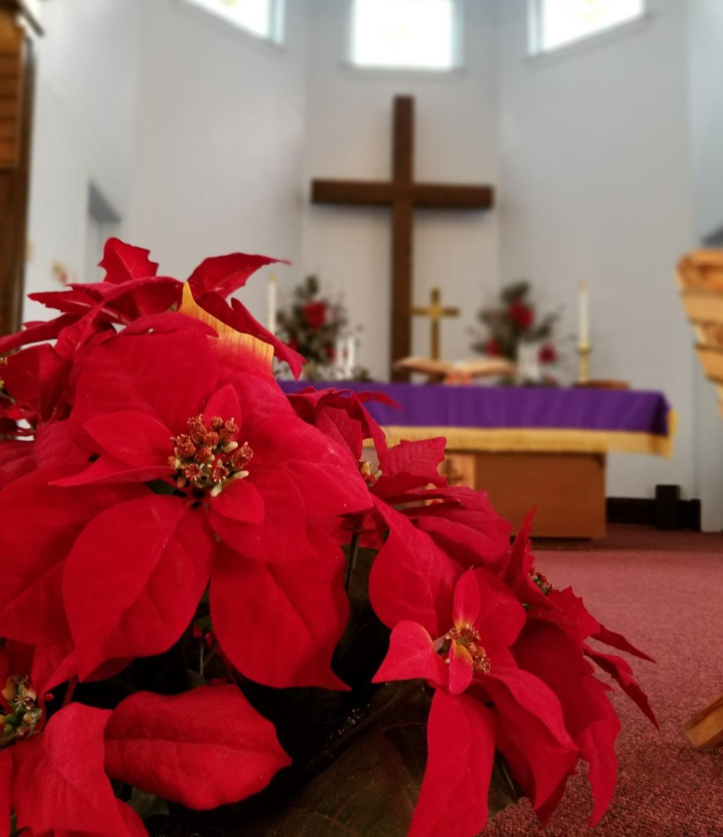 Nous devons passer entre les poinsettias, symbole de la naissance du Christ, pour arriver à la croix, dit le révérend Patrick Lewis des églises méthodistes unies Palisade et Fruita du Colorado. Photo de Patrick Lewis.