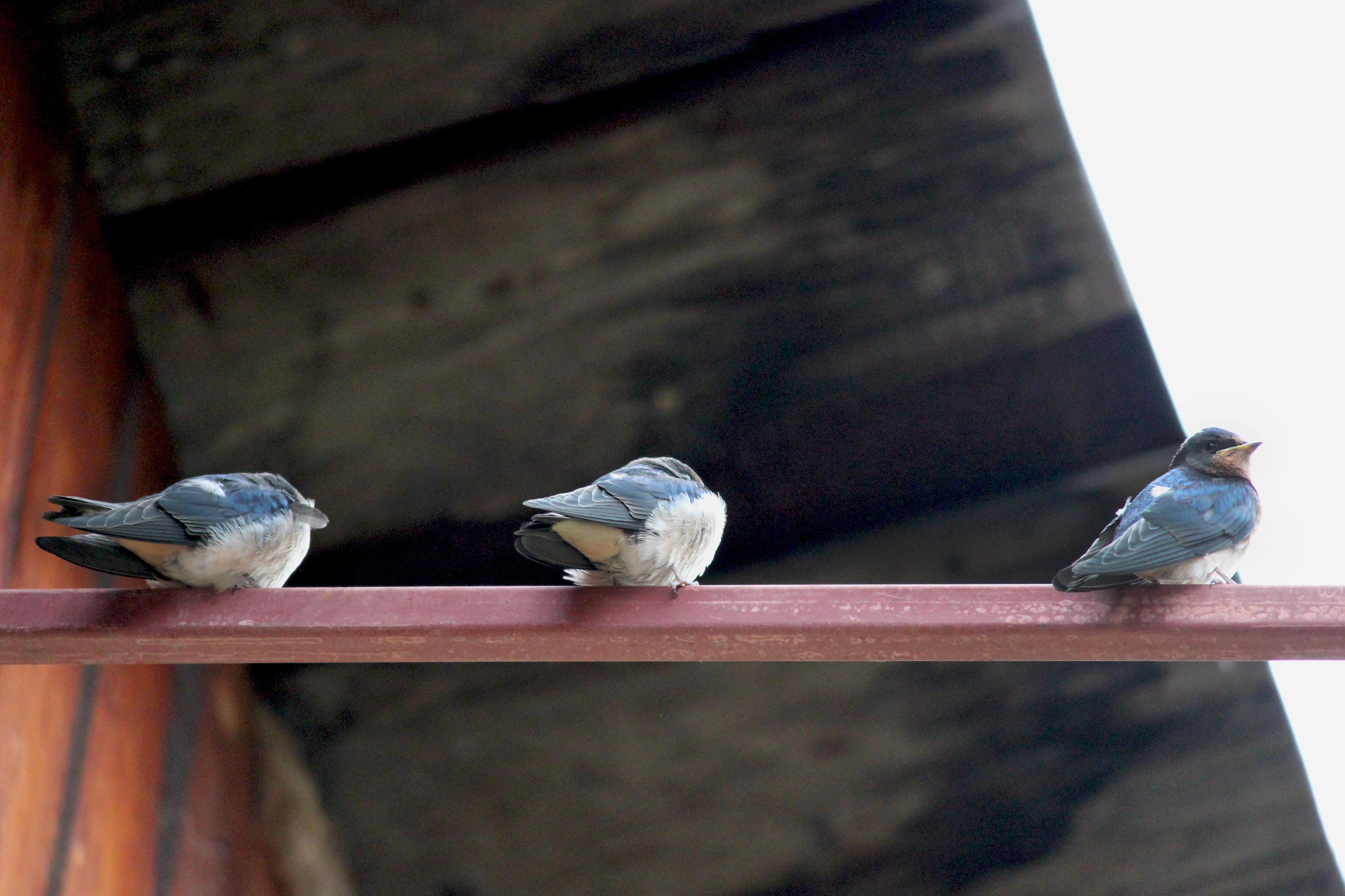 Three Little Birds and the Presence of Faith