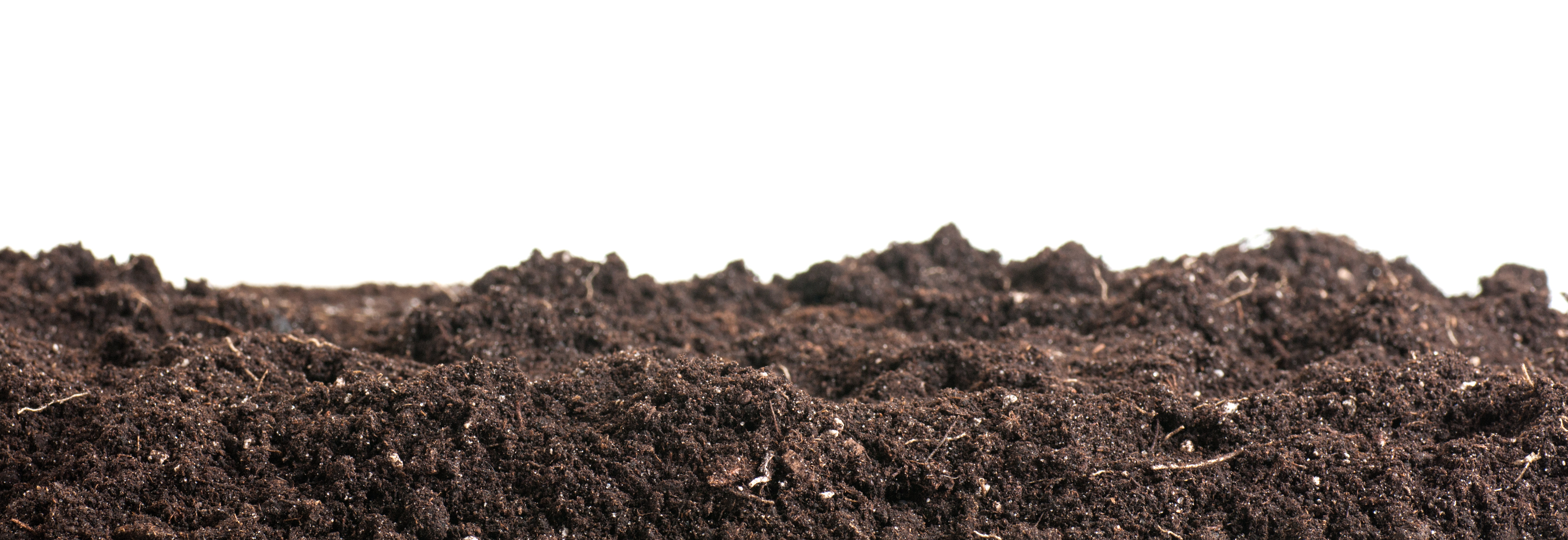 Tip 11: Start home composting
