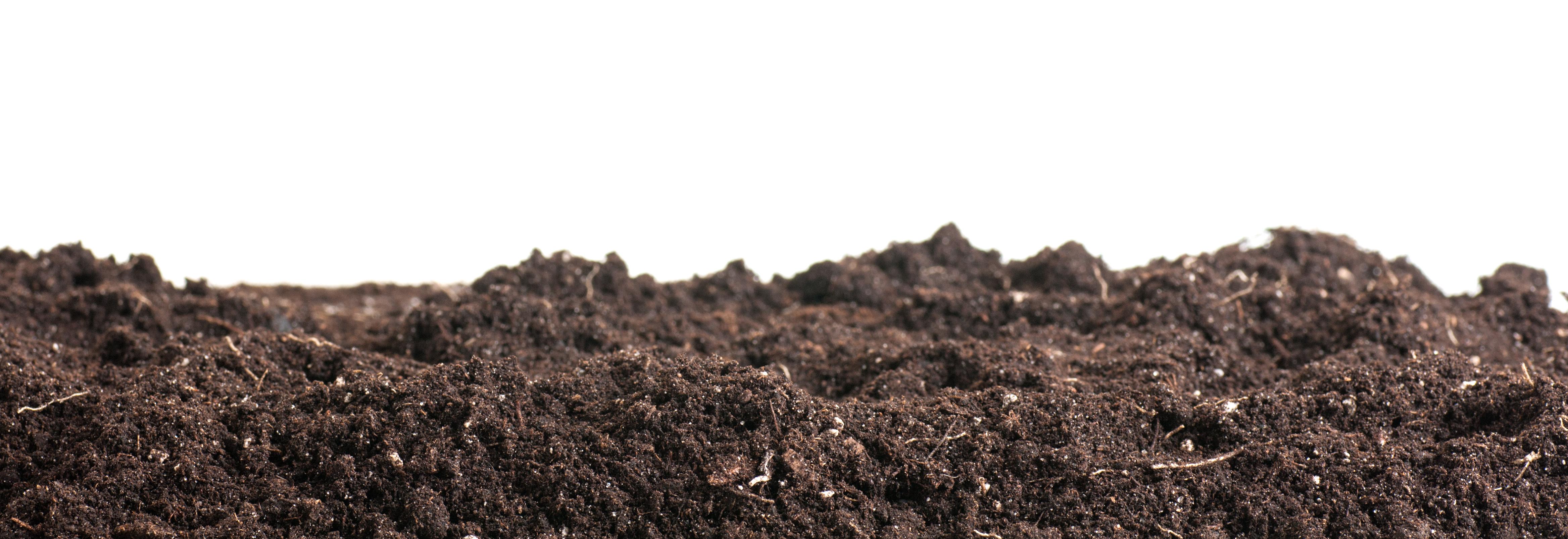 Tip 11: Start home composting