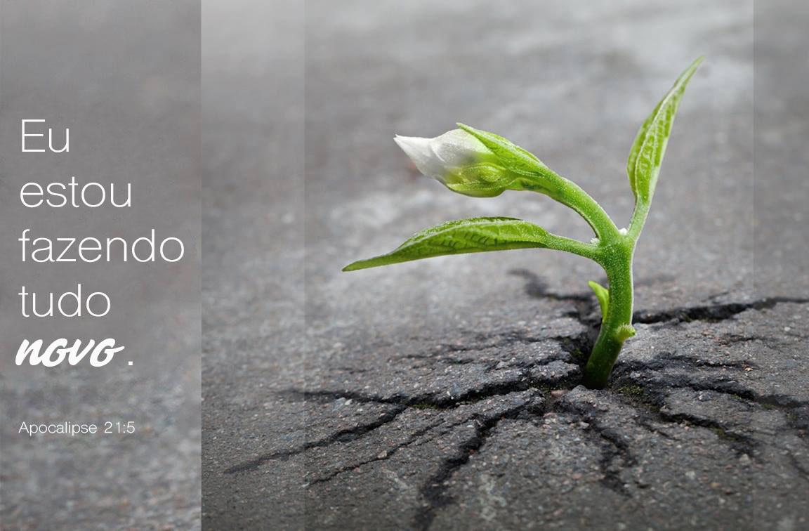 Foto de Skeeze, cortesia de pixabay.com. Gráfico original da Laurens Glass; Versão em português Rev. Gustavo Vasquez, Notícias MU