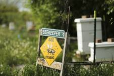 Beekeeping photo by Jeffrey D. Allred, Deseret News