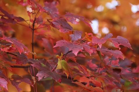 A New England fall photo. Photo by Kay Panovec for United Methodist Communications.