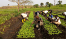 Trainees attending crop production sessions at Kamisamba Farm receive hands-on instruction in the fields. PHOTO: Lorraine Charinda