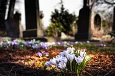 The crocus is viewed by some as a symbol of hope and new life after winter. Image courtesy of Pixabay.